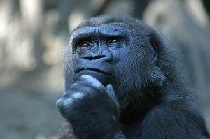 contemplative
